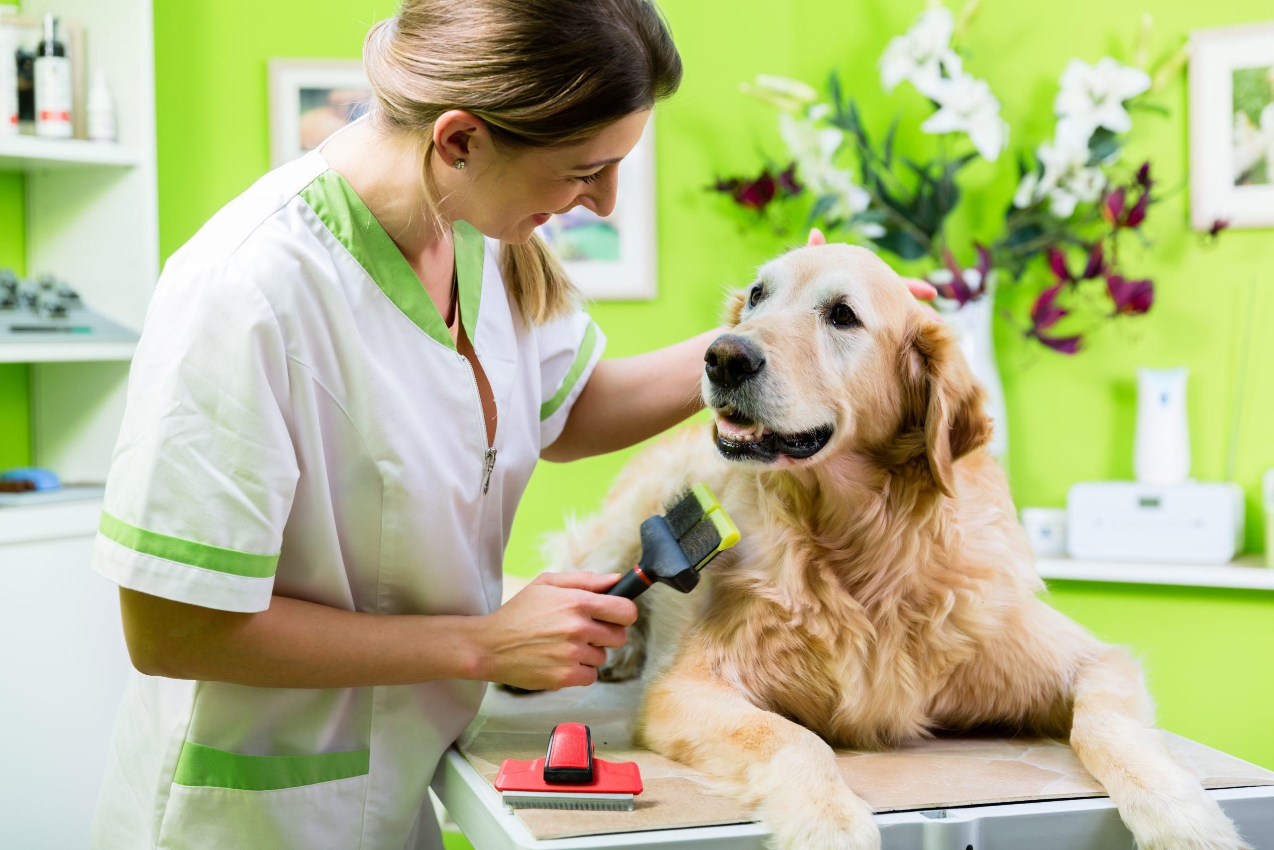 Learn How to Take Care of Your Pets Health